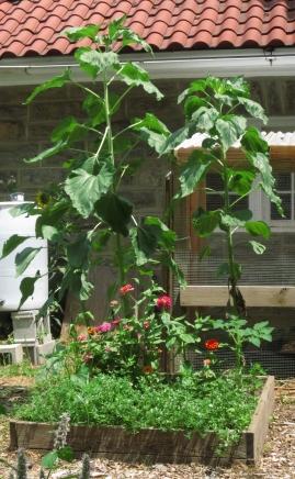 Kala's flower garden.